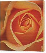 Close Up Of Rose Wood Print