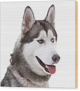 Close-up Of Siberian Husky Wood Print