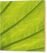 Close-up Of Surface Of A Green Leaf Wood Print