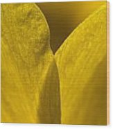 Close Up Of The Petals Of A Daffodil Wood Print by Todd Gipstein