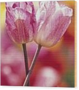 Close-up Of Tulips Wood Print