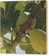 Close-up Of Two Large Figs Hanging Wood Print