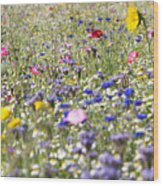 Close Up Of Vibrant Wildflowers In Sunny Field Wood Print