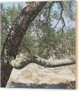 Close Up Olive Tree Wood Print