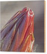 Close Up On Cactus Flower Bud Wood Print