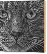 Close Up Portrait Of A Cat Wood Print