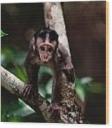 Close View Of A Baby Macaque Wood Print