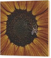 Close View Of A Bee On A Sunflower Wood Print