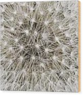 Close View Of A Dandelion Seed Head Wood Print
