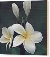 Close View Of A Delicated Plumeria Wood Print