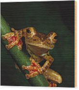 Close View Of A Harlequin Tree Frog Wood Print by Tim Laman