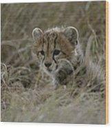Close View Of A Juvenile Cheetah Wood Print