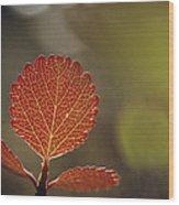 Close View Of A Leaf Wood Print