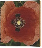 Close View Of A Poppy Wood Print