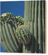 Close View Of A Saguaro Cactus Saguaro Wood Print