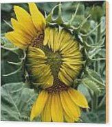 Close View Of A Sunflower Blossom Wood Print
