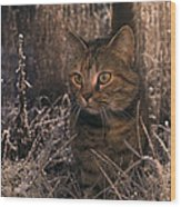 Close View Of A Tabby Cat Wood Print
