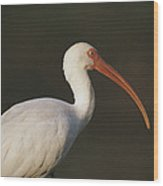 Close View Of A White Ibis Wood Print