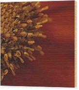 Close View Of A Zinnia Wood Print