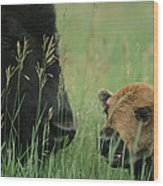 Close View Of An American Bison Wood Print