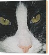 Close View Of Black And White Tabby Cat Wood Print