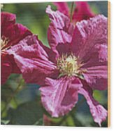Close View Of Clematis Flowers Wood Print
