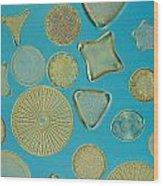 Close View Of Diatoms Wood Print