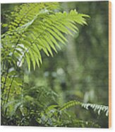 Close View Of Ferns In A Papua New Wood Print