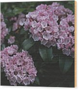 Close View Of Flowering Mountain Laurel Wood Print