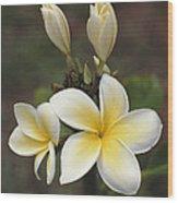 Close View Of Frangipani Flowers Wood Print