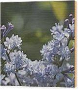 Close View Of Hyacinth Lilacs Syringa Wood Print