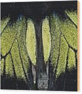 Close View Of Iridescent Moth Wings Wood Print