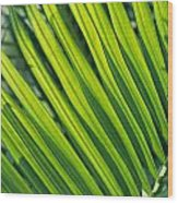 Close View Of Palm Fronds Wood Print