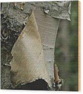 Close View Of Paper-birch Bark Wood Print