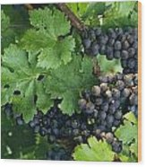 Close View Of Red Grapes On The Vine Wood Print