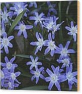 Close View Of Spring Flowers Wood Print