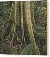 Close View Of Tree Roots In A Rain Wood Print by Michael Melford