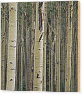Close View Of Tree Trunks In A Stand Wood Print