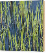 Close View Of Water Grasses Growing Wood Print