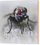 Closeup Of A Fly  Wood Print by Maureen  McDonald