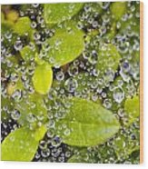 Closeup Of Morning Dew On Leaves Wood Print