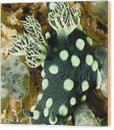Closeup Of Nudibranch Nembrotha Wood Print