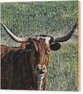 Closeup Of Texas Longhorn Wood Print