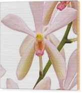 Closeup Pink Orchid Wood Print