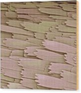 Clothes Moth Scales, Sem Wood Print