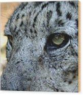 Clouded Leopard Face Wood Print