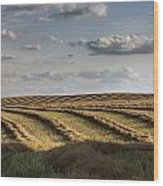 Clouds Over Canola Field On Farm Wood Print