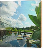 Cloudy Reflections And Lily Pad Companions  Wood Print