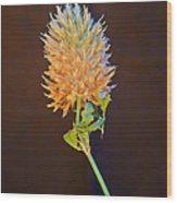 Clover Aglow 6 Wood Print