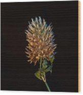 Clover Aglow 7 Wood Print